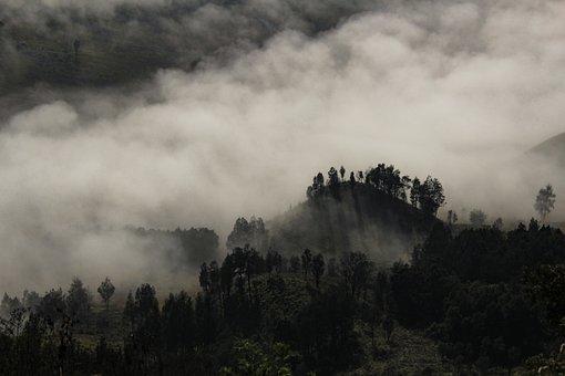 Foggy, Tree, Landscape, Fog, Nature