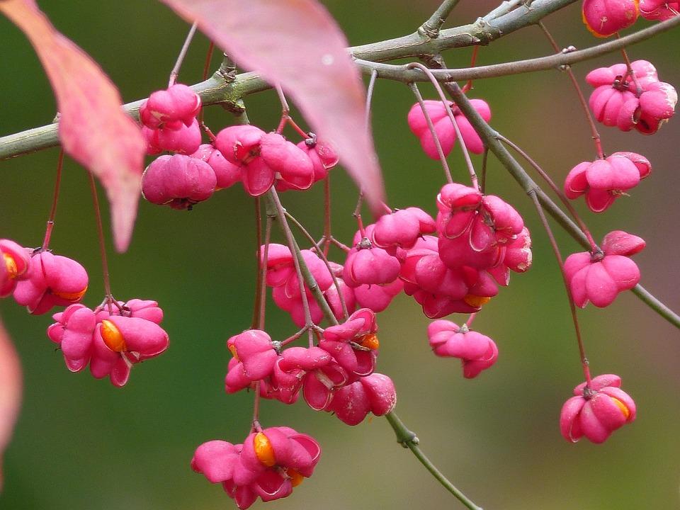 Høst Blomster Natur · Gratis foto på Pixabay