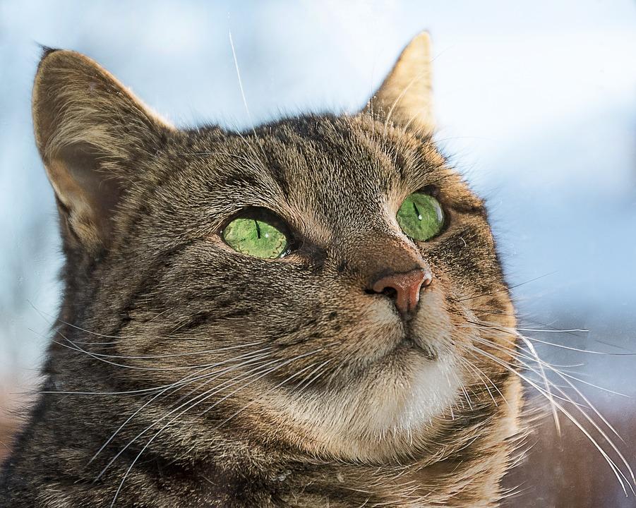 Zadarmo zblízka mačička obrázky