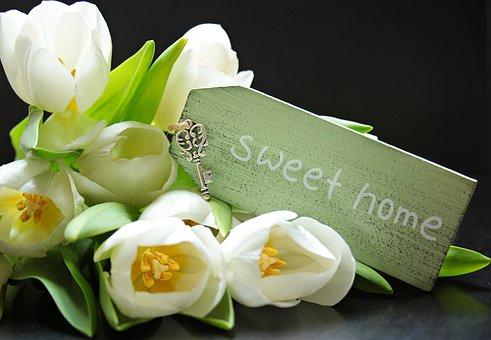Tulipes, Tulipa, Bouclier, Sweet Home