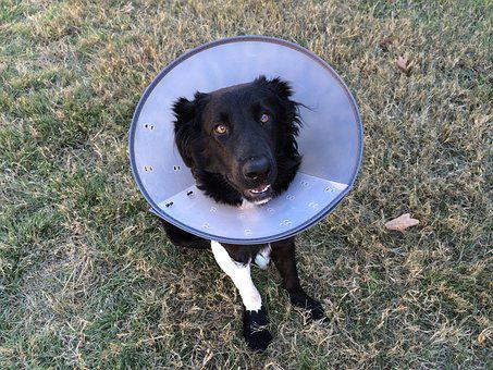 Cone Of Shame, Puppy, Animal, Canine