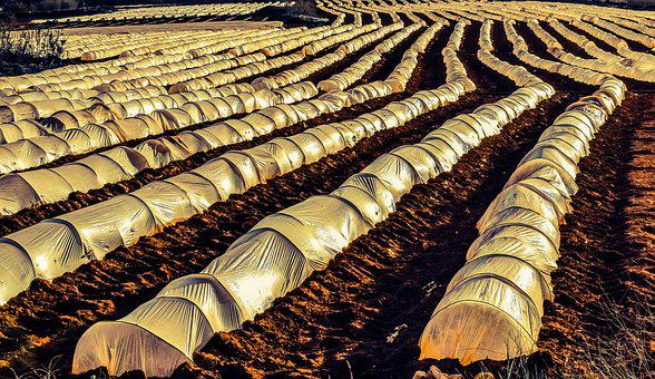 Farm, Agriculture, Field, Rows, Nylon