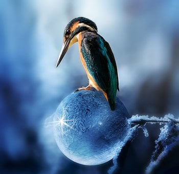 Composing, Kingfisher, Bird, Spring