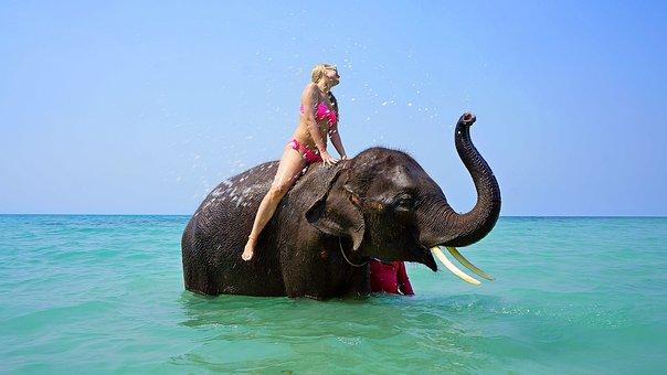 Lady riding elephant walking through water