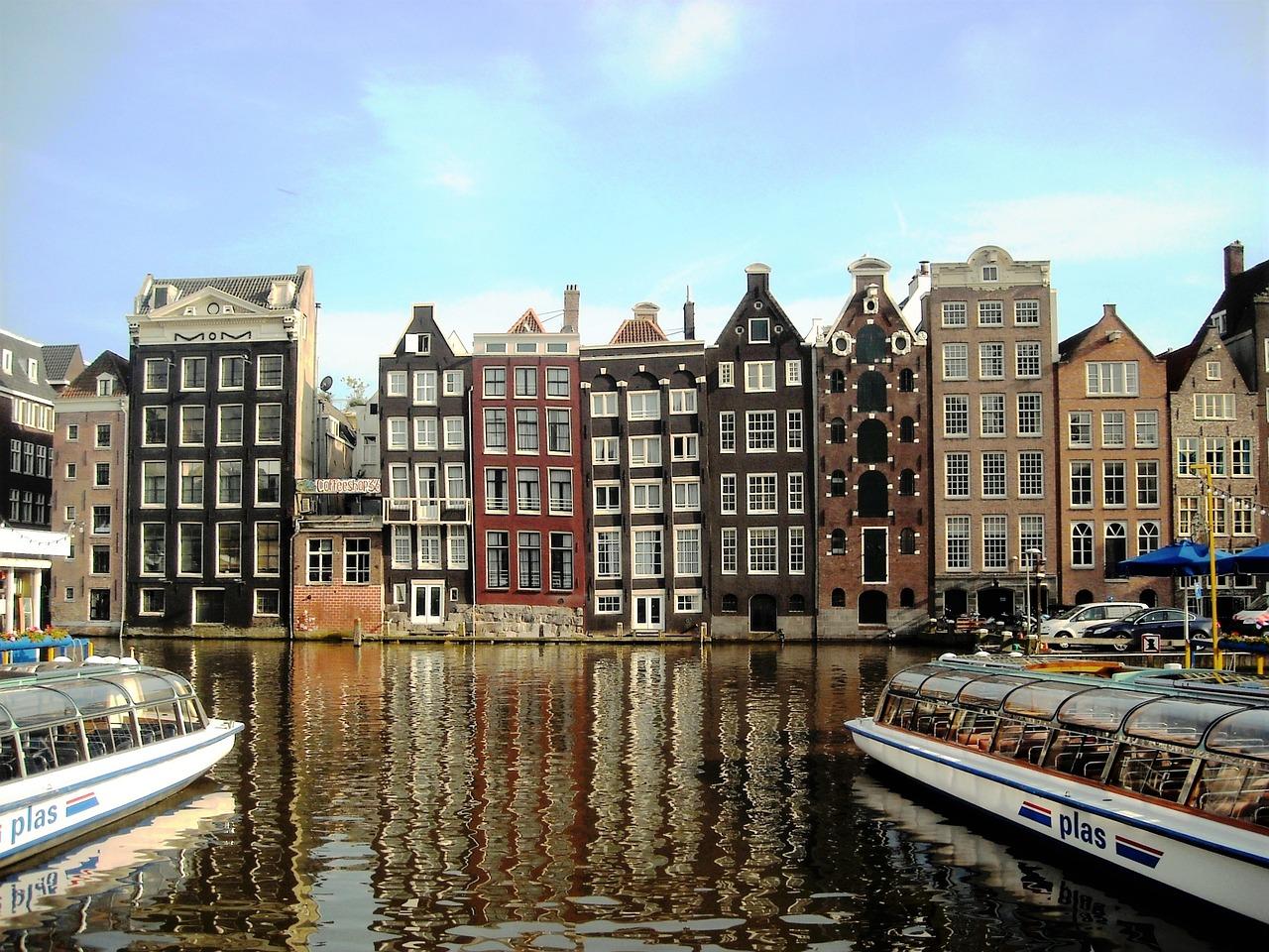 смотреть картинки амстердама попугаев, кажется, имеет