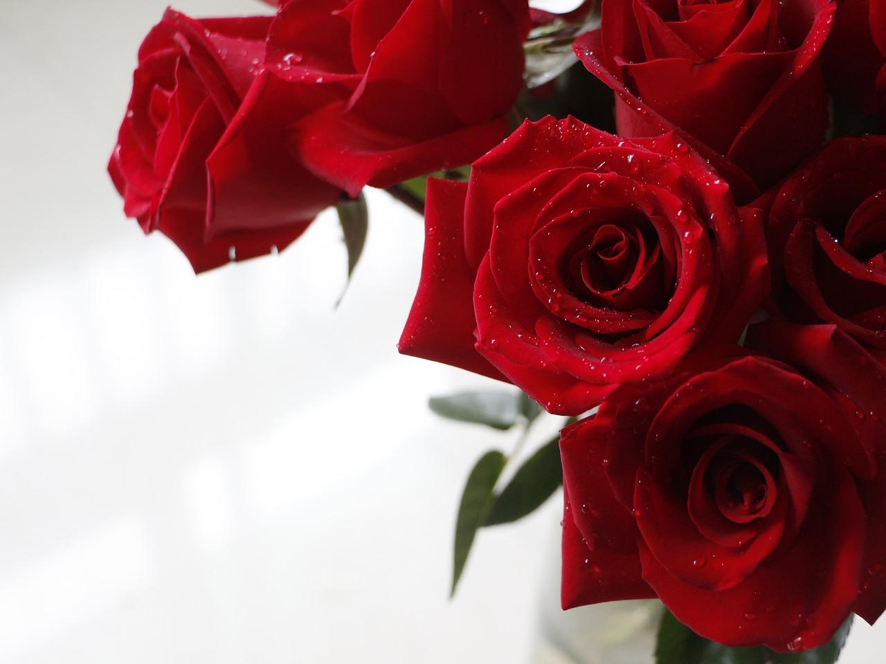 Открытка 3 красных розы, надписями смыслом про