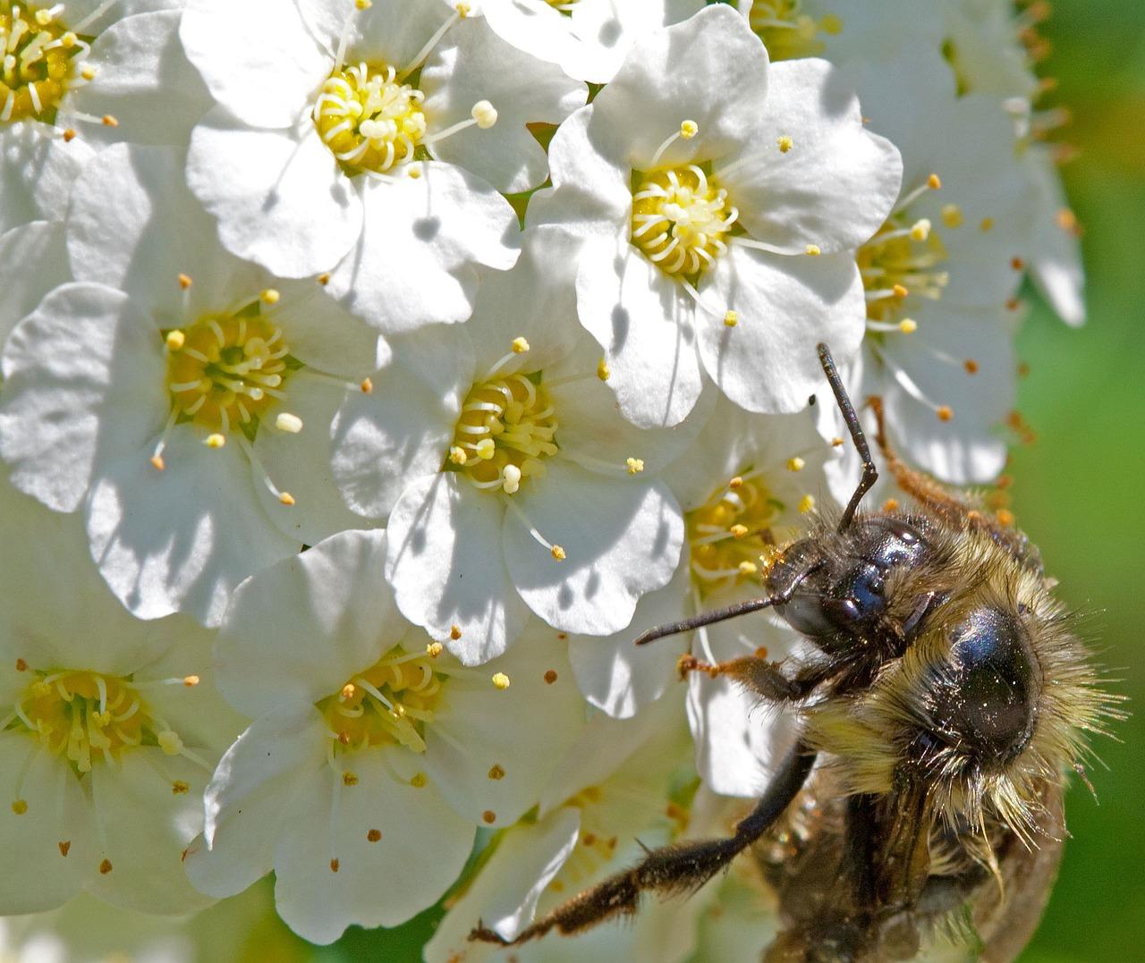 вытяжки картинки пчела на цветочке много старинных