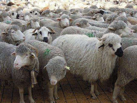 ЕС призвал прекратить экспорт живых животных
