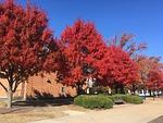 fall, trees