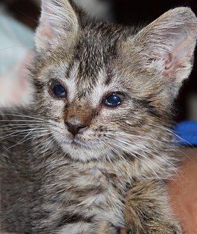 Kitten, Tiny, Baby, Cat, Pet, Cute