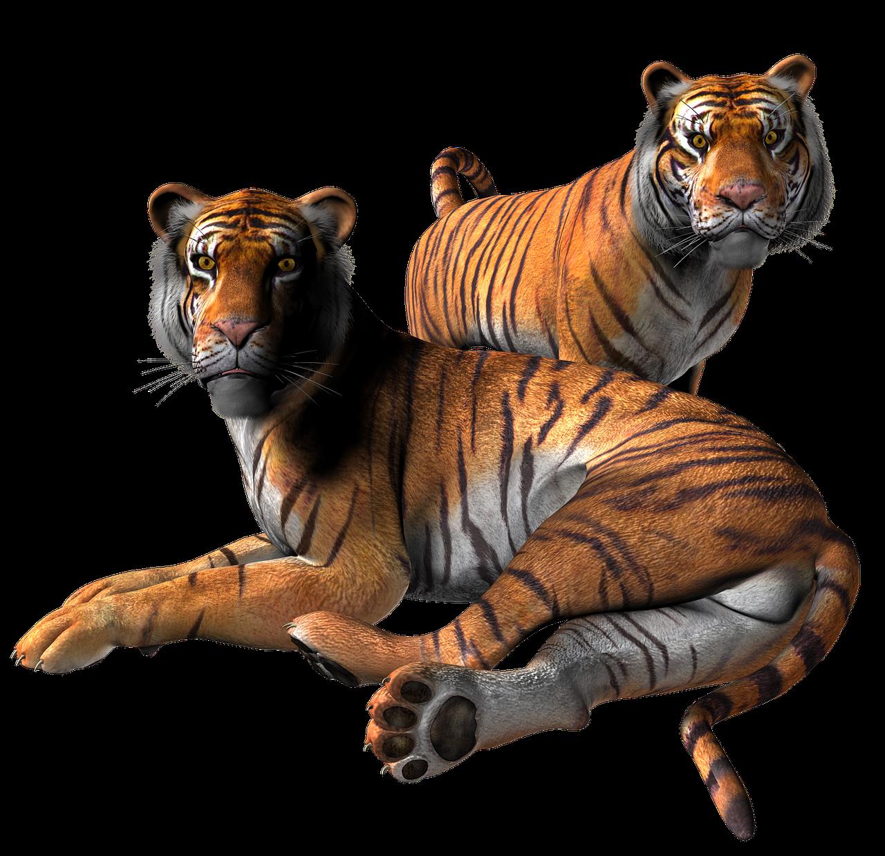 Tiger Animal Cat Free Image On Pixabay