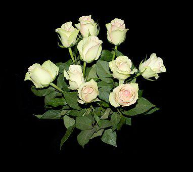 Rózsa, Menstruáció, Háttér, Gyönyörű