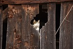 cat, barn, hiding place