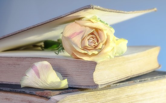 Rose, Libro, Viejo Libro, Flor, Bloom