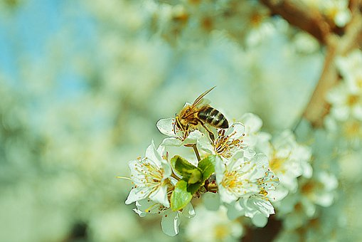 Nature, Flowers, Wasp, Branch, Tree