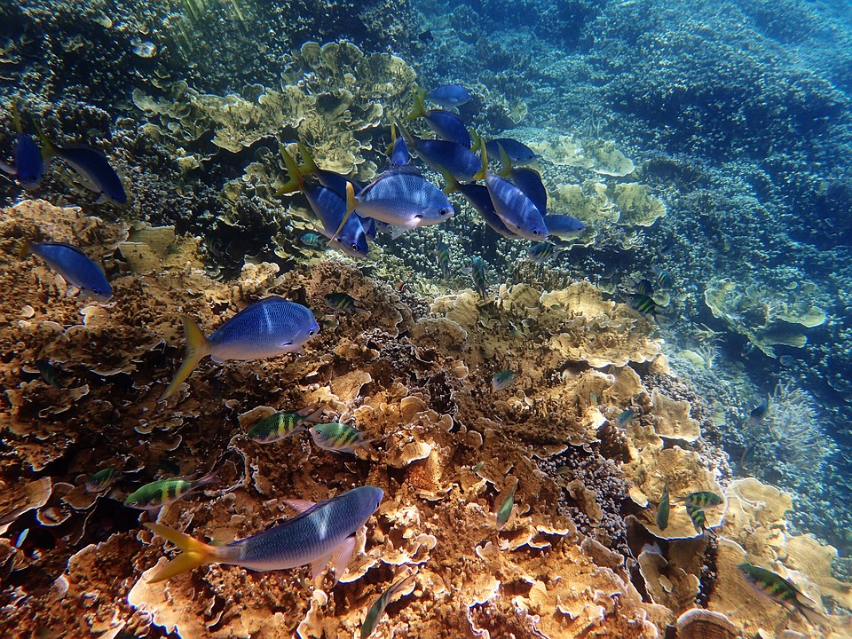 """Image result for great barrier reef"""""""