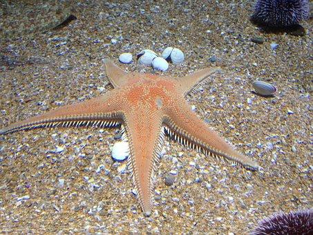 Starfish, Sand, Aquarium, Starfish