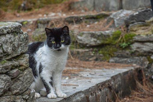 Gato, Black, Animal, Gato Preto