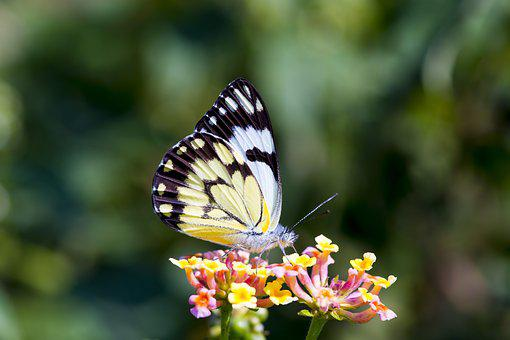 Butterfly, Africa, Colorful