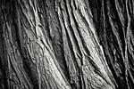drzewo, kory, dziennik