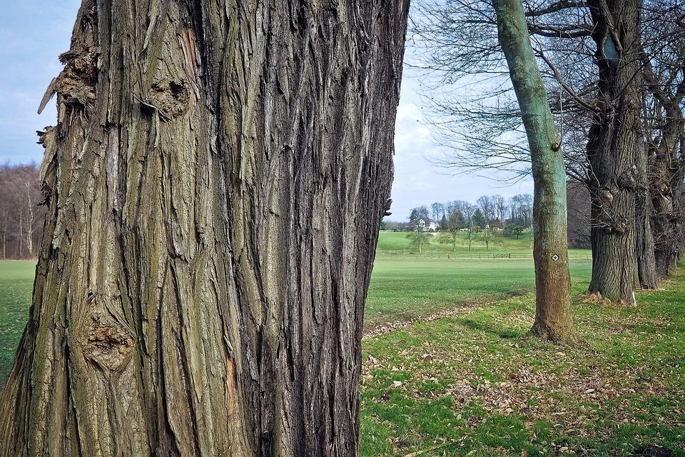 Free photo: Wood, Tree Trunks, Nature, Old - Free Image on Pixabay ...