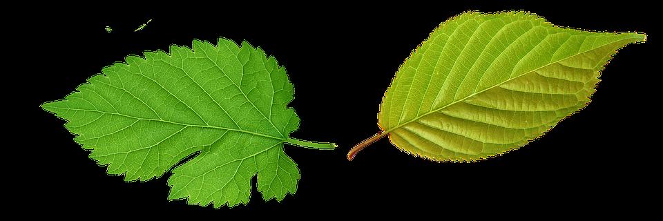 Feuille verts feuilles image gratuite sur pixabay feuille verts feuilles plante vert feuilles vertes altavistaventures Image collections