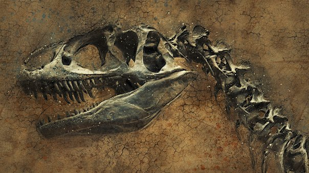 Dinosaur, Skeleton, Background, Texture