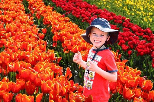 男孩, 郁金香, 快乐, 孩子, 儿童, 鲜花, 年轻