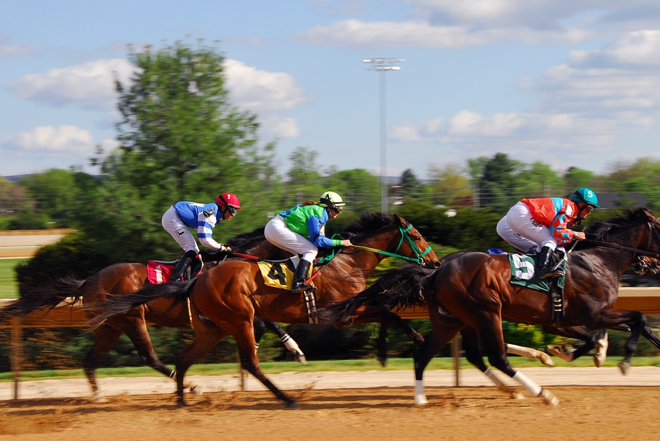 Horse Racing, Race, Racehorse, Power, Speed, Equestrian