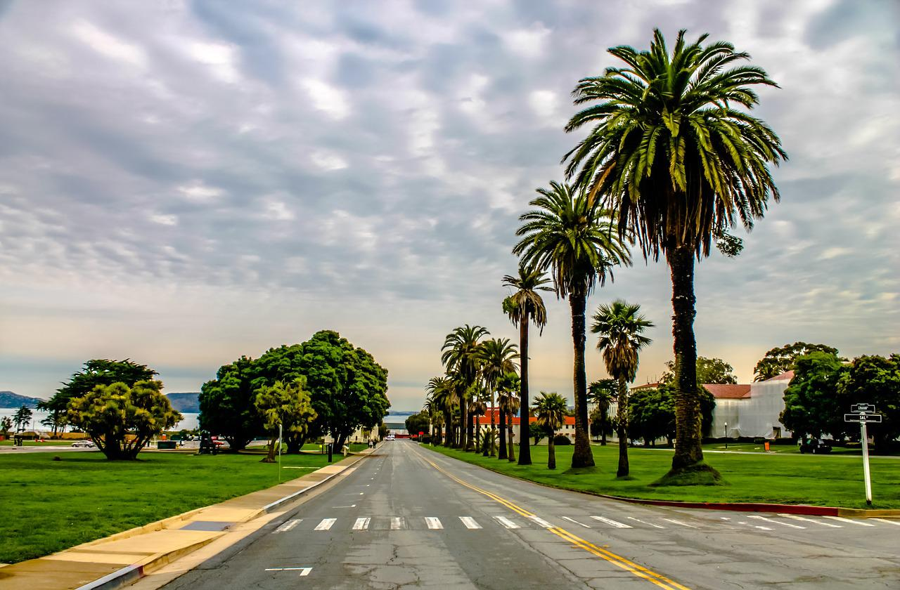 фото дорога пальмы будут