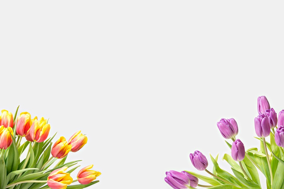 flower background frame 183 free image on pixabay