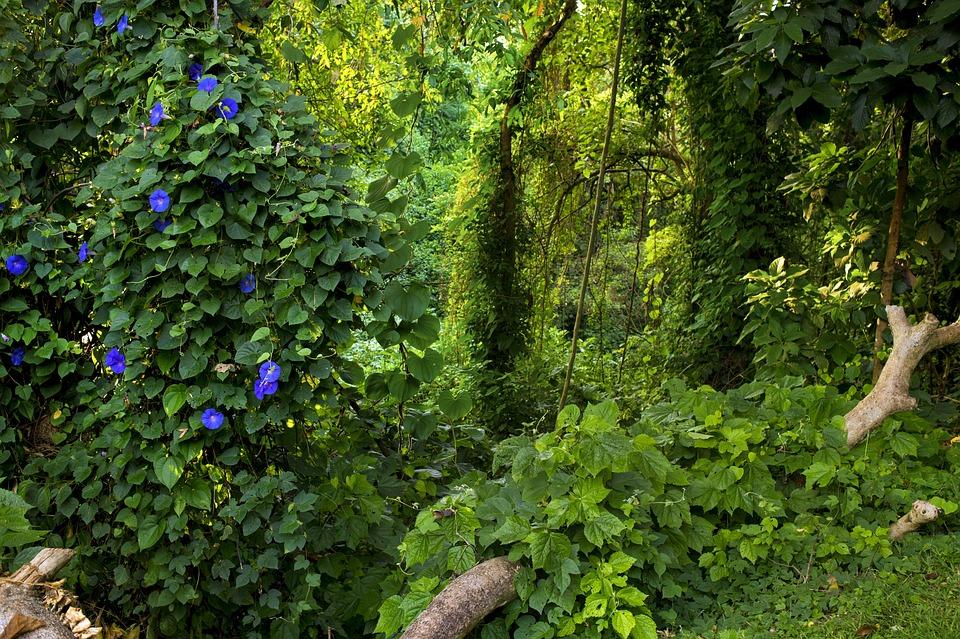jungle uganda green 183 free photo on pixabay