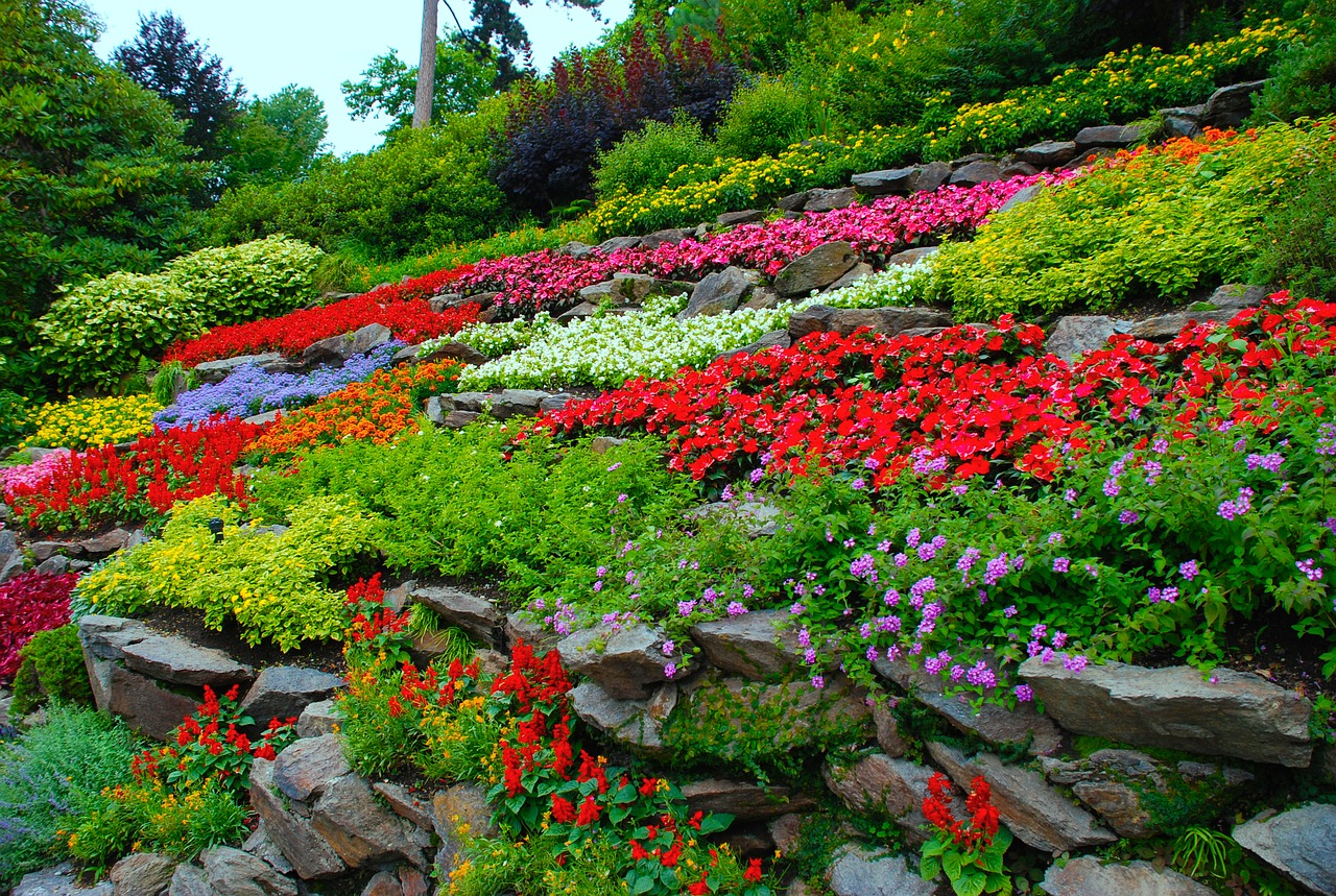 a colorful flower garden