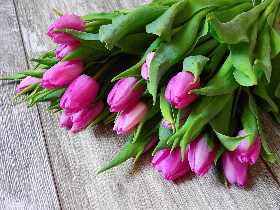 photo gratuite: fleur, tulipes, bouquet - image gratuite sur
