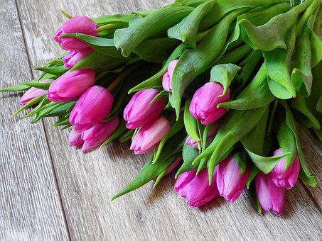Lampada Fiore Tulipano : Tulipani immagini · pixabay · scarica immagini gratis