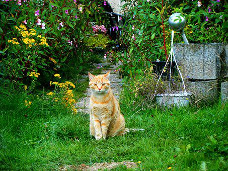 Exceptional Cat Garden Red Cat Domestic Cat Pet Young
