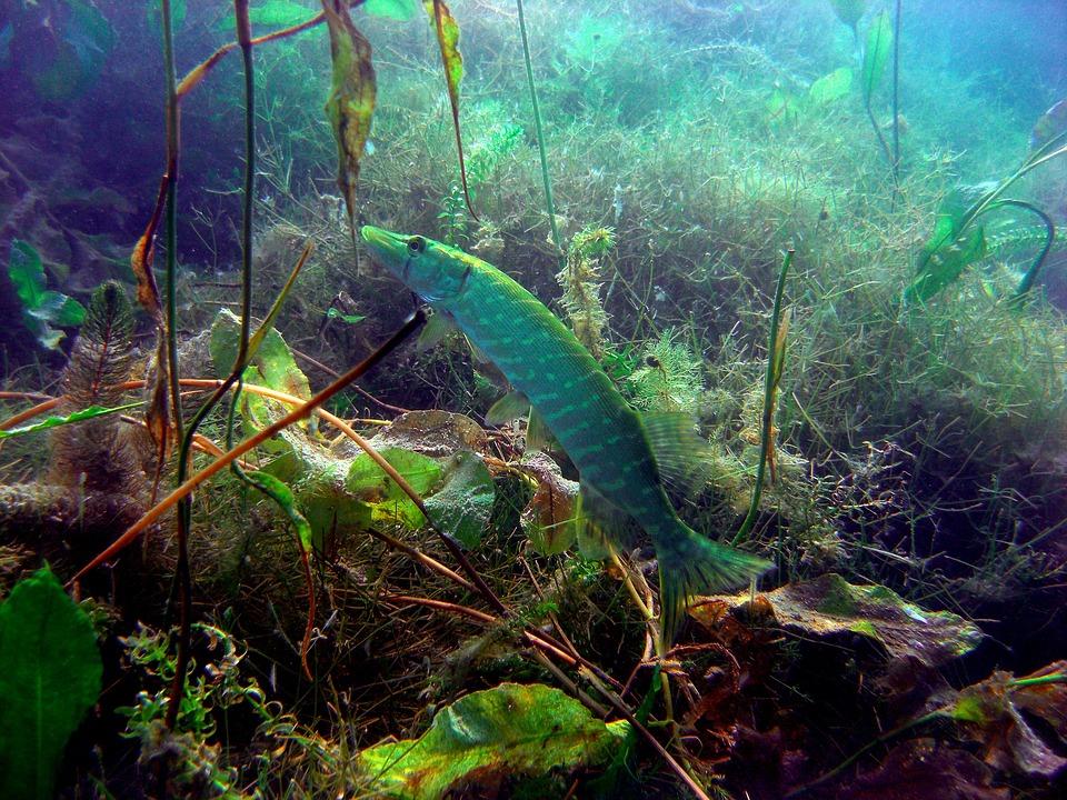 рыбалка на щуку в траве