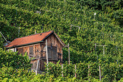 Vineyard, Ludwigsburg Germany, Hut