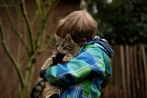 Friendship, Child, Cat, Together