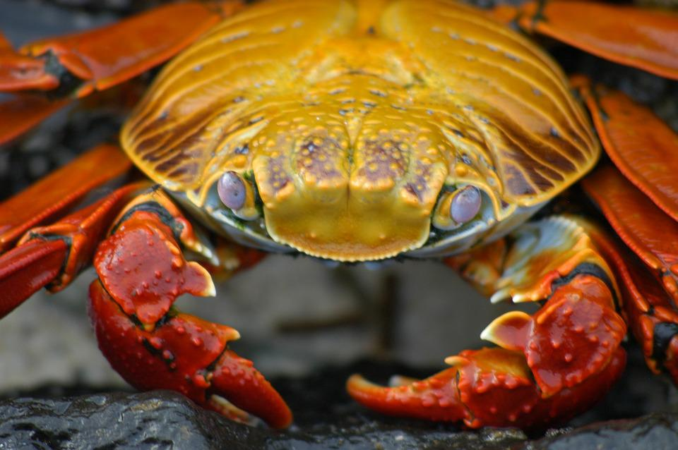 Bodily Characteristics of Crustaceans