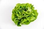 sałatka, zielony, warzywa