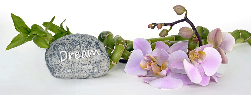 Orquídea, Orquídeas Phalaenopsis, Bambú