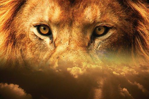 Lion, Yeux, Ciel, Tête, Visage, La Faune