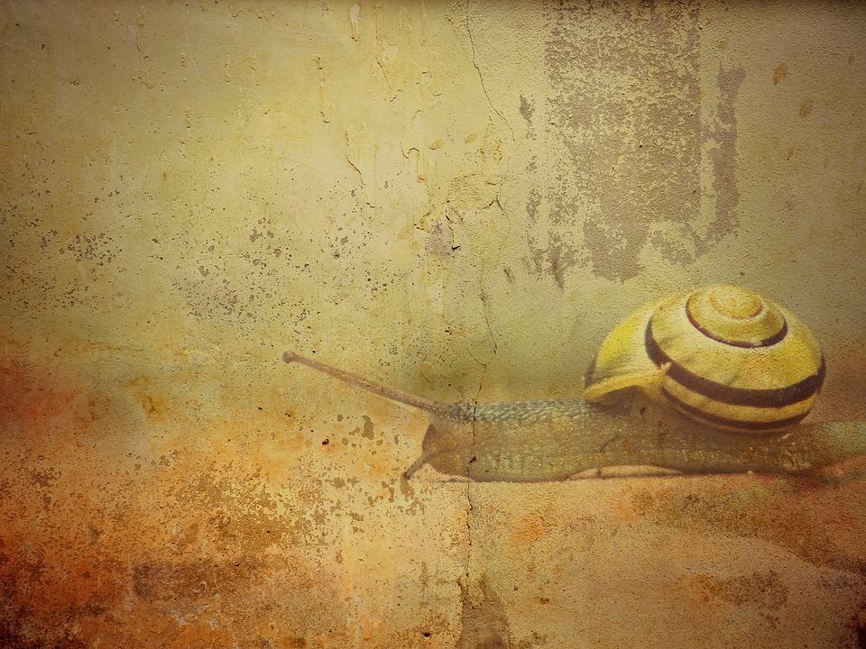 Snail Shell Texture