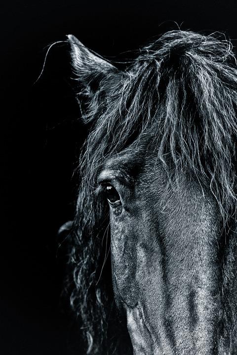 Horse Portrait Pony 183 Free Photo On Pixabay