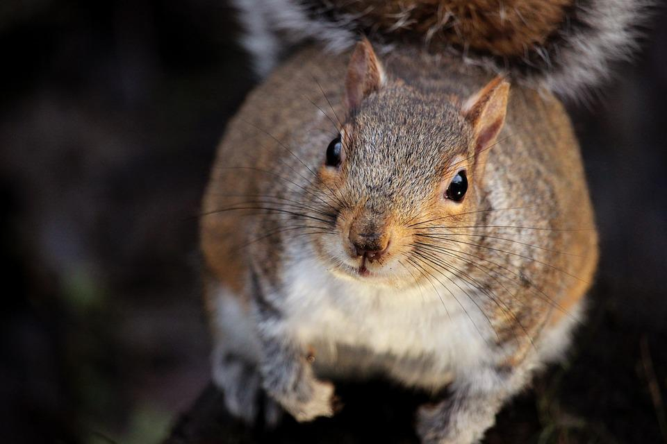 Animal, Squirrel, Nature, Wild, Cute, Wildlife, Mammal