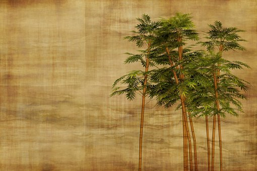 Bamboo Images 183 Pixabay 183 Download Free Pictures