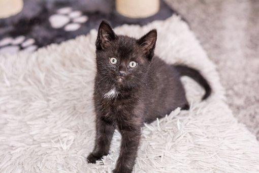 Baby Cat, Cat Baby, Kitten, Young Cat