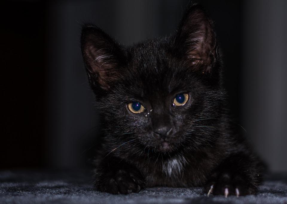 Mladá roztomilá kočička