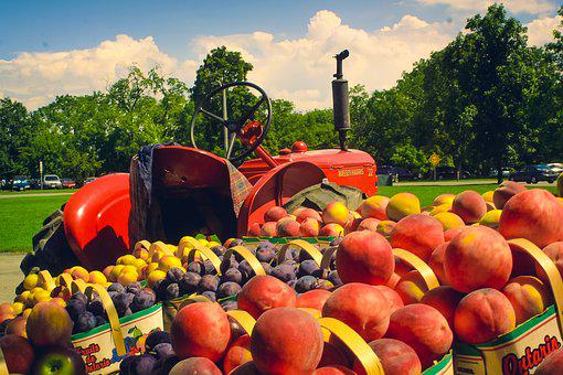 Fruit, Food, Tractor, Wagon, Farm